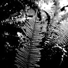 Monochromatic Fern by alymaco