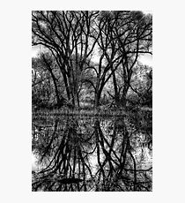 Tree Lines in Black and White Photographic Print