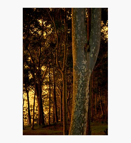 Warm light on the trees Photographic Print