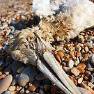 Dead Gannet by FraserJ