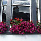 pink box  - Town House window by Babz Runcie