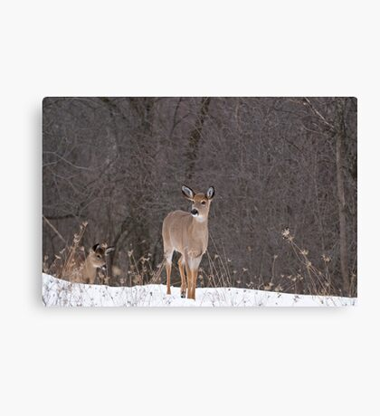 Doe and Friend Canvas Print