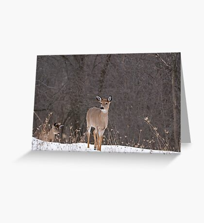Doe and Friend Greeting Card