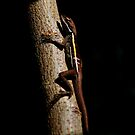 Little Lizard Friend! by oddoutlet