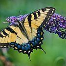 Papillon de Printemps by Jean-Pierre Ducondi