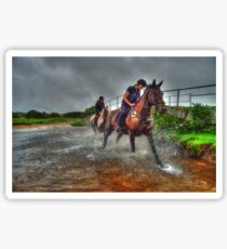 Water Horses HDR  Sticker