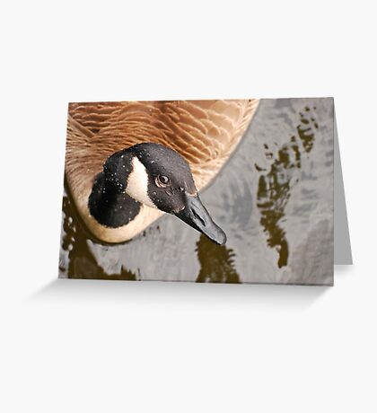 Canada Goose Eh! Greeting Card