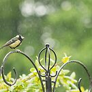Great tit in the rain  by yampy