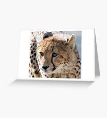 Cheetah Cub Greeting Card