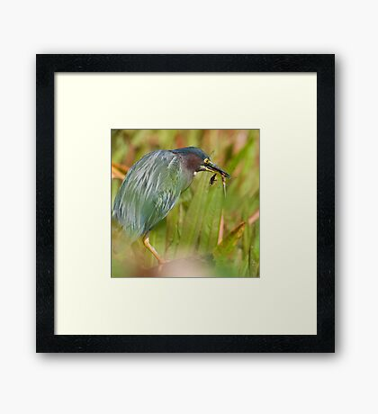 Green Heron with Dragonflies Framed Print
