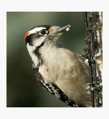 At the Feeder  Photographic Print