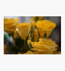 Rose Depth  Photographic Print