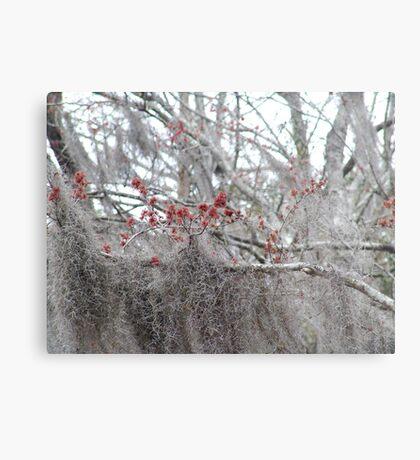 Maple Tree Buds and Spanish Moss Metal Print