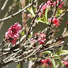 Bloomin' Pink; Wat Garden, La Mirada, CA USA by leih2008