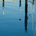 Little Grebe among Reflections by Nerone