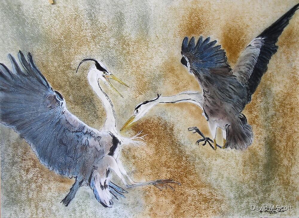 Battling Gray Herons by David M Scott