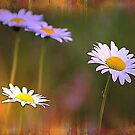 Dreamy Daisies by Darlene Lankford Honeycutt