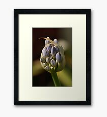About to Shine. Framed Print