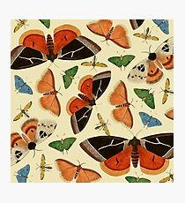 Vintage Butterflies Photographic Print
