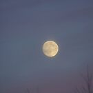 Winter Afternoon Moon by MarianaEwa