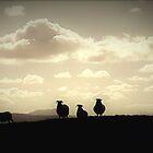Sheep Silhouettes by beavo