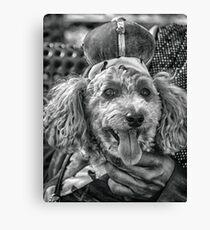 Hund im Urlaub Leinwanddruck