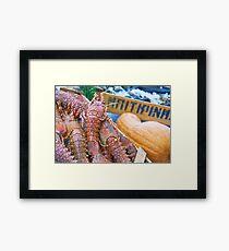 Spiny Lobsters Framed Print