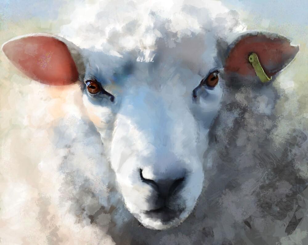Winter sheep face, Romney Marsh by SWCooper