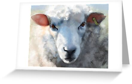 Winter sheep face, Romney Marsh by SWCooper