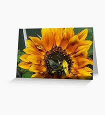 1st sunflower this year Greeting Card