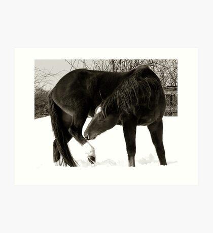 Horse Portraits #2 B&W Art Print