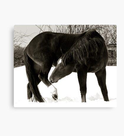 Horse Portraits #2 B&W Canvas Print