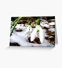 The first snowdrops Greeting Card