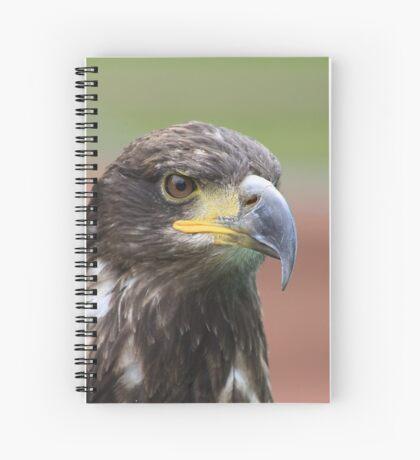 Juvenile Bald Eagle Spiral Notebook