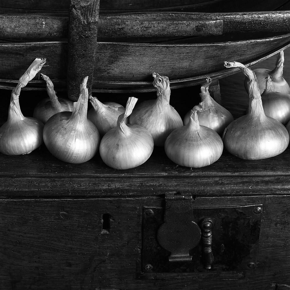 Onions by Summicron