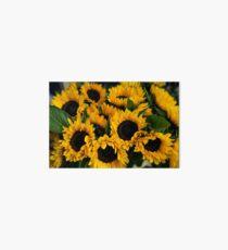 Sunflower Sensation Art Board Print