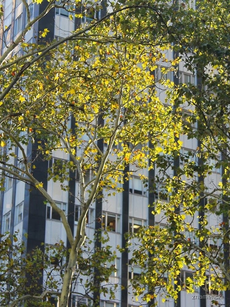#tree, #leaf, #nature, #outdoors, #wood, #summer, #landscape, #garden, #environment, #sky, #season by znamenski
