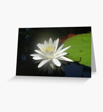 Waterlily with Damselfly Greeting Card