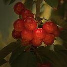 Cherries to Die For by Elaine Teague