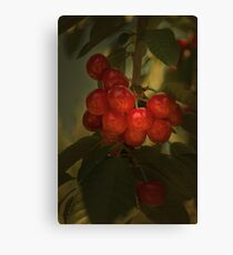 Cherries to Die For Canvas Print