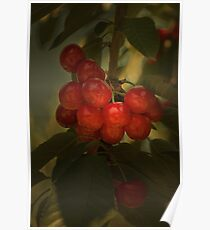Cherries to Die For Poster