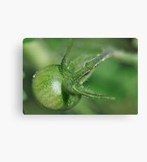 Green Baby Tomato Canvas Print