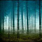 enter the forest by Dirk Wuestenhagen