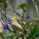 Prettiest Bird in Town by oddoutlet