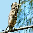 A Haughty Heron by byronbackyard