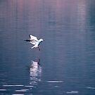Landing by Stefano  De Rosa