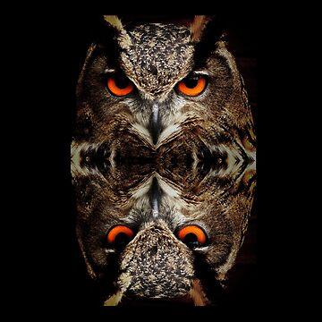 owl reflexion  by CarlosV