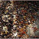 Feel the Rustle of Leaves, Dead Leaves on a Deck by Wayne King