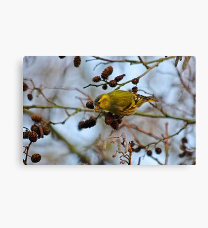 Adult Male Siskin Canvas Print