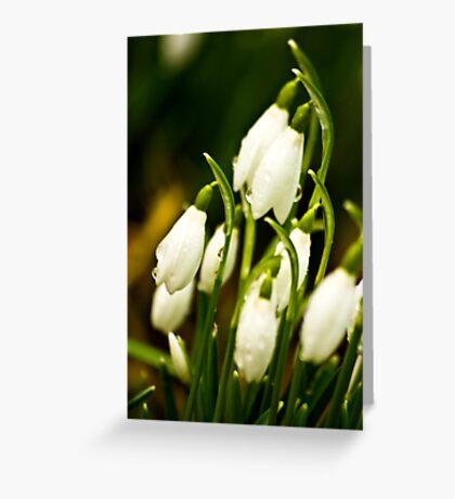 Snowdrops #2 Greeting Card